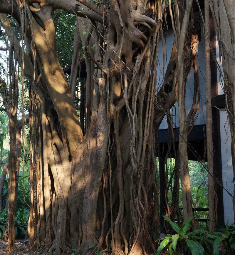 Bijoy Jain's house09 _Francesca Molteni